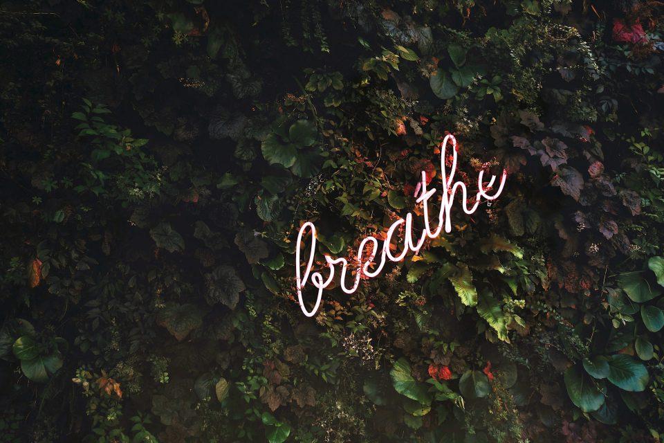 Oktober Pflanzen Wand Schrift Breathe Atmen Neon Tim Goedhart VnpTRdmtQ Unsplash